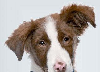 Собака с GPS трекером на ошейнике