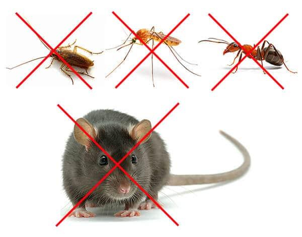 Как работает ультразвуковой отпугиватель мышей и крыс